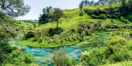 Blue Spring which is located at Te Waihou Walkway,Hamilton New Zealand. It internationally acclaimed supplies around 70% of New Zealands bottled water because of the pure water. 스톡 콘텐츠