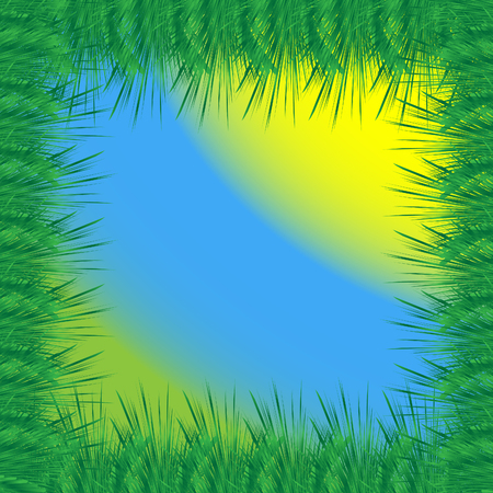 evergreen tree: An softwood. The frame of the branches of an evergreen tree with grass and sun.