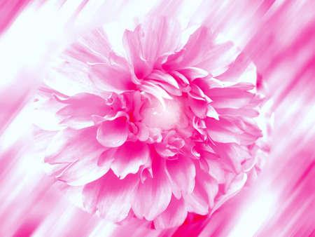 Texture Pink