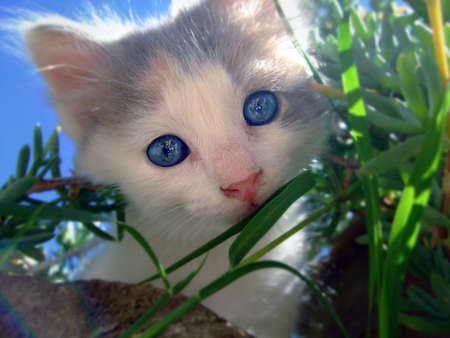 Cat watching from the vegetation