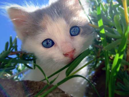 mammalian: Cat watching from the vegetation
