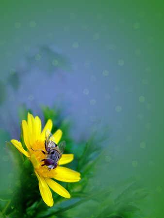 Flower, Invertebrate animals Stock Photo
