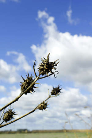 spines: Spines with cloudy sky background