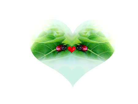 Love of nature, Ladybug