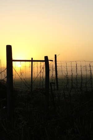 Sunrise in the field, fog