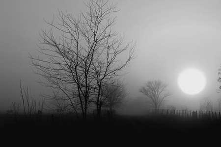 Sunrise, fog is gray