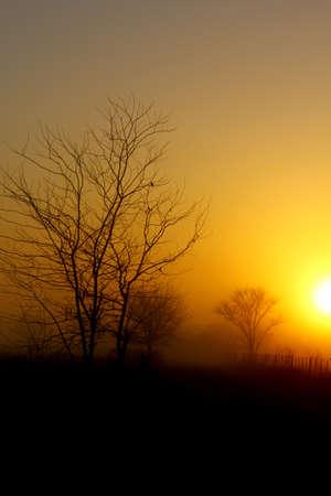 Sunrise, fog