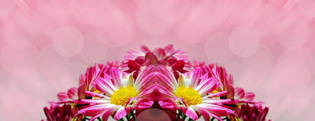 Pink flowers Stock Photo - 10541061