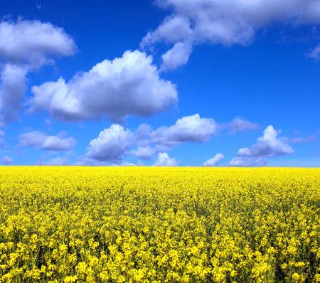 Field of yellow flowers Stock Photo - 10572806