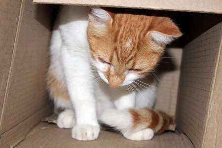 Cat in shipping box