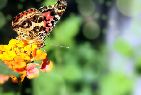 Biology, Botany, butterfly. photo