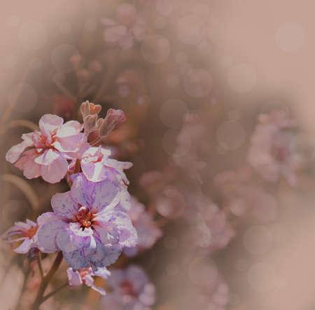 wallflower: double wallflower