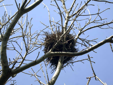 Bird s Nest Stock Photo - 17256792