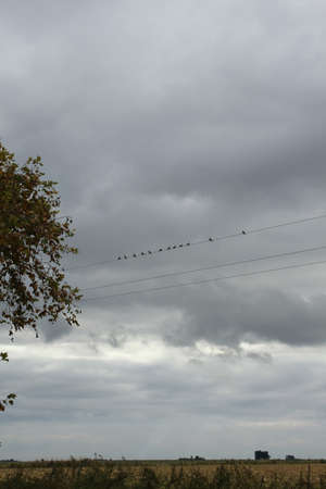 Pigeons on the wire on a background of gray storm clouds photo
