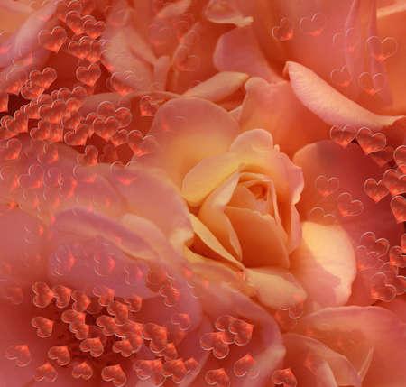 beautiful flower Stock Photo - 17350152