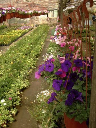 nurseries: selling business plants Stock Photo