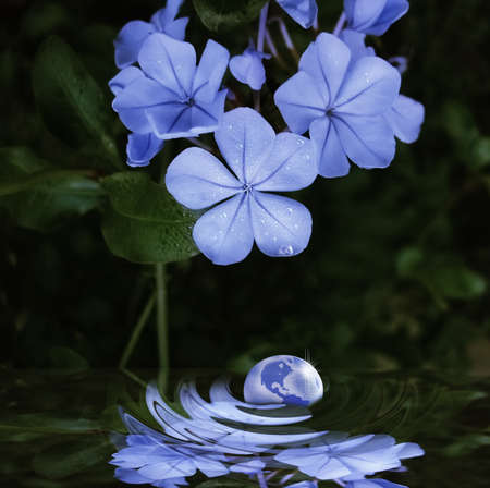 drops of the planet in nature photo