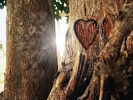 Carved heart in a tree trunk photo