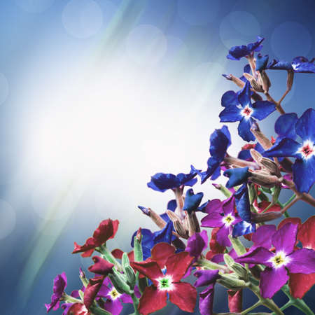 flowers on a blue background photo