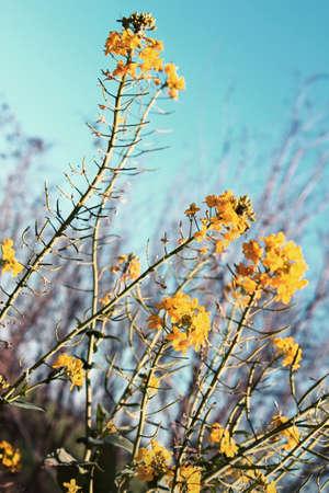 wallflower: Wallflower on sky