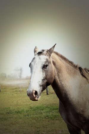 állat fej: Ló, Animal Head, közelkép