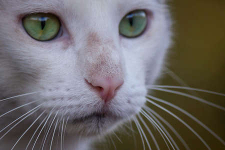 whiskers: cat whiskers and nose