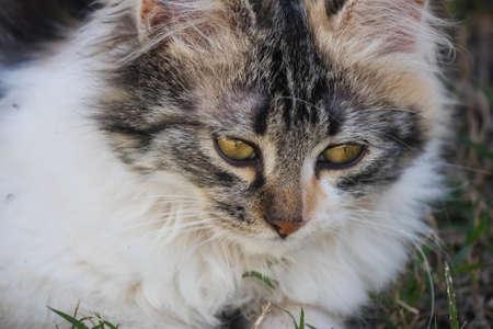 sweetly: Beautiful kitten lying on the grass