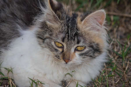 sweetly: Beatiful kitty