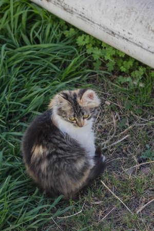 calico whiskers: kitten sitting in the garden