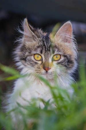 establishes: kitty behind green grass