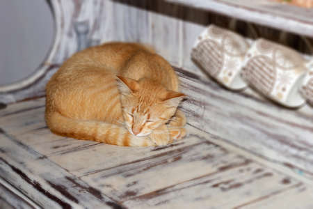 Cat sleeping Stok Fotoğraf