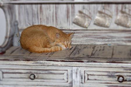 cat, sleeping cat