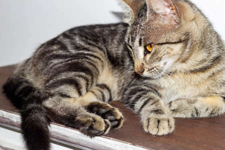 Striped cat on rustic furniture. looking