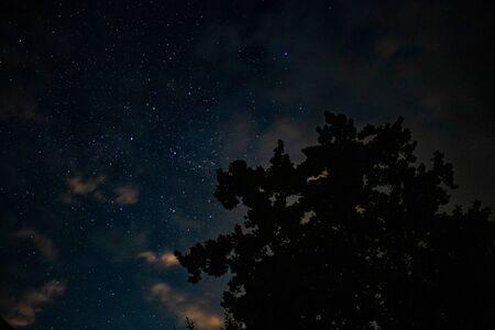 Starry night sky over a tree