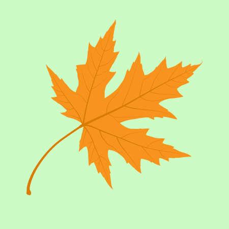 カエデの葉。イラスト。