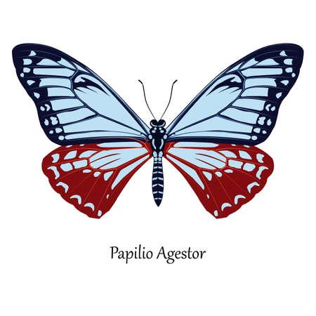 Afbeelding van Indiase Swallowtail - Papilio Agestor. Vector Illustratie