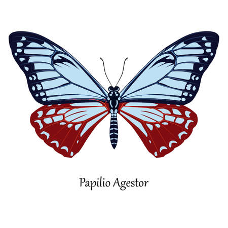 Illustration of Indian Swallowtail Butterfly - Papilio Agestor.