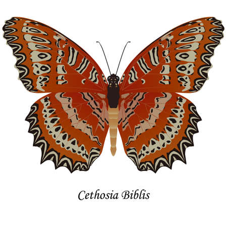 Illustration of India, Indonesia butterfly of the Nymphalidae family - Cethosia biblis. Element for design. ClipArt. The element of training patterns, biological descriptions, etc. Imagens - 80641056