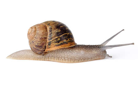 sluggish: Snail