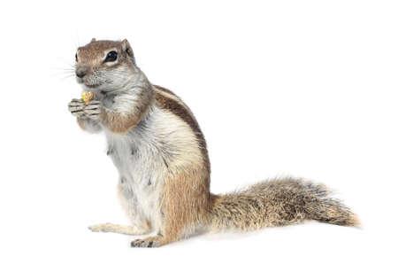 ground nuts: Squirrel