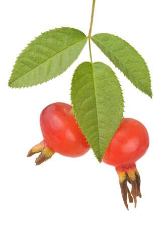 mellow: Rosehip rose hip Stock Photo