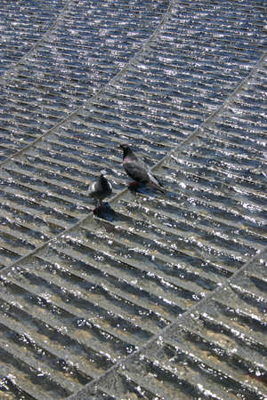 water feature: pigeons in water feature