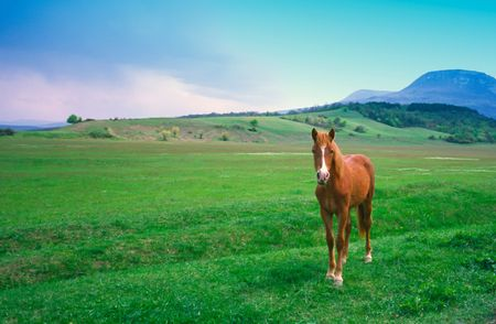 Young red horse on  background of mountains