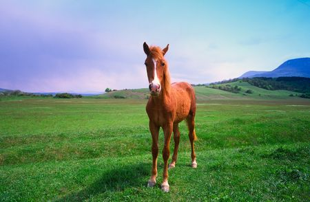charmingly: Young red horse on  background of mountains and  blue sky Stock Photo