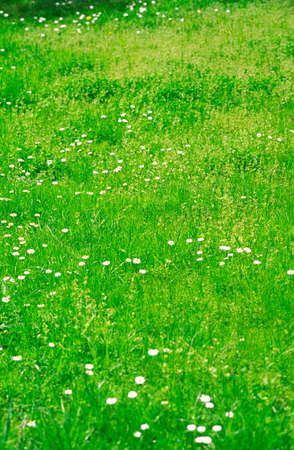 midday: Midday, green spring grass in park