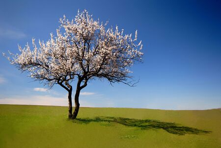 Lonely blossoming tree in  field on  background of  blue sky with clouds
