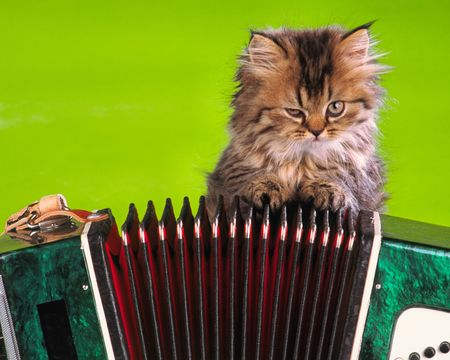 hesitant: small kitten sits near  musical instrument on  green background