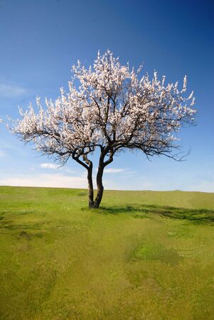 Lonely blossoming tree in  field on  background of  blue sky with clouds Stock Photo - 885106