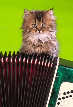 small kitten sits on musical instrument, close up