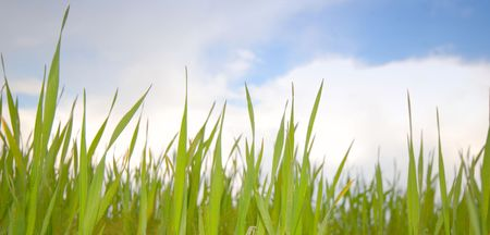 Green grass on  background of  sky, spring Stock Photo - 915929
